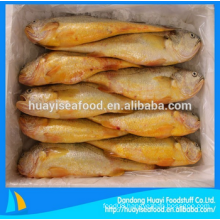 frozen fresh cheap baby yellow croaker with excellent price